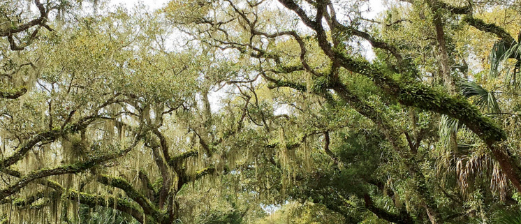 5 Must-See Florida State Parks to Camp in Your Florida RV Rental